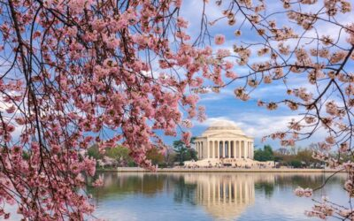 Cherry Blossoms in Washington D.C. 2020 – Bus 2