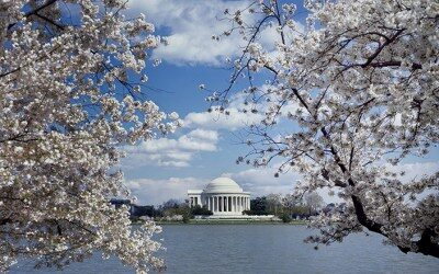 CHERRY BLOSSOMS IN WASHINGTON DC-APRIL 2021 Bus 3